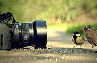 Фотоаппарат-с-птичками