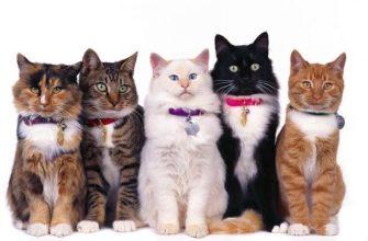 8 августа. Всемирный день кошек