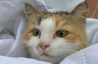 Спасённая-кошка