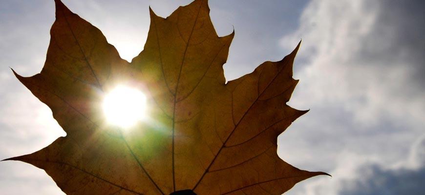 Лист и Солнце