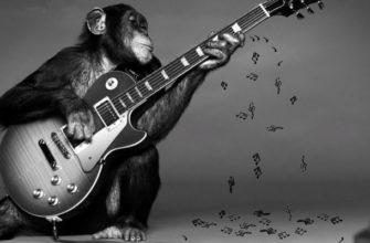 Обезьяна с гитарой