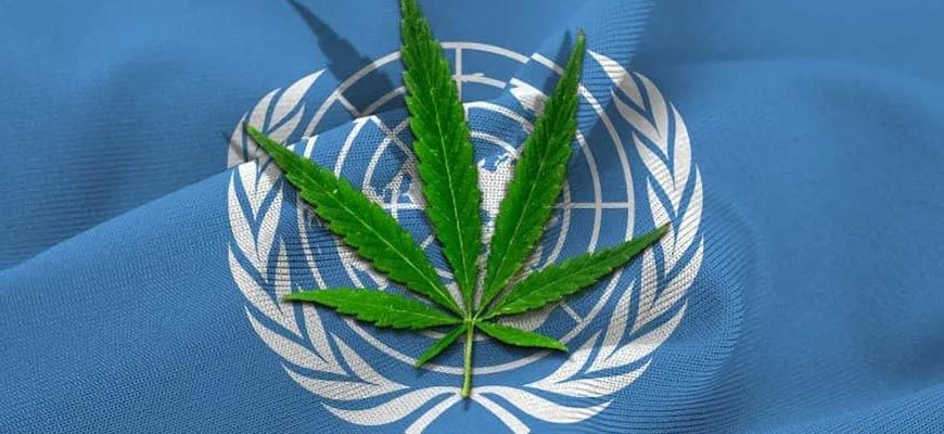 Флаг ООН и лист конопли
