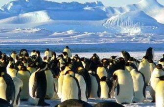 День осведомлённости о пингвинах