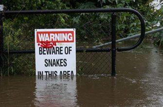 Австралийский потоп