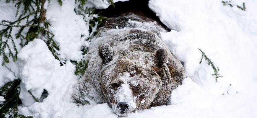 Медведь вылез из берлоги